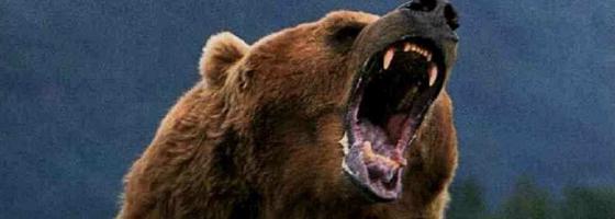 bang-voor-de-beer