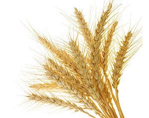 graan-producten